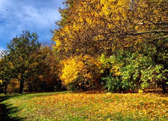 Laufinstinkt+ Oktober-Impressionen '15 F