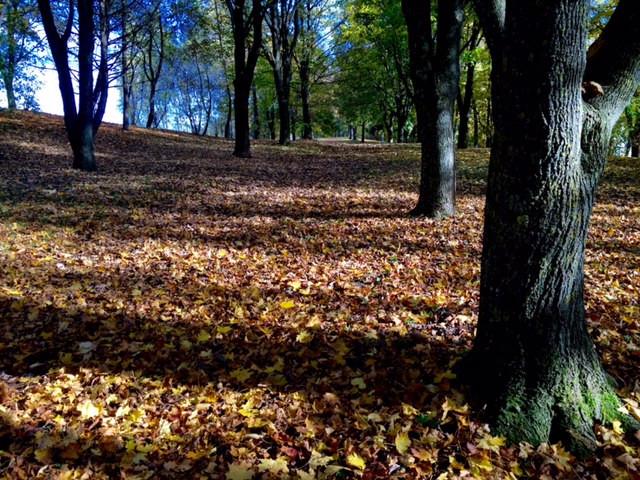 Laufinstinkt+ Oktober-Impressionen '15 H