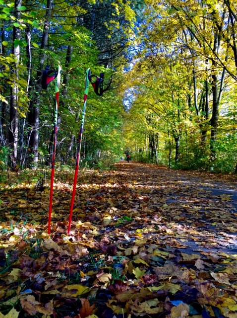 Laufinstinkt - Vergleich Nordic Walking mitLaufen -Bild 2