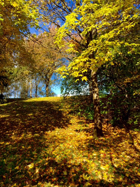Laufinstinkt+ Oktober-Impressionen '15 I