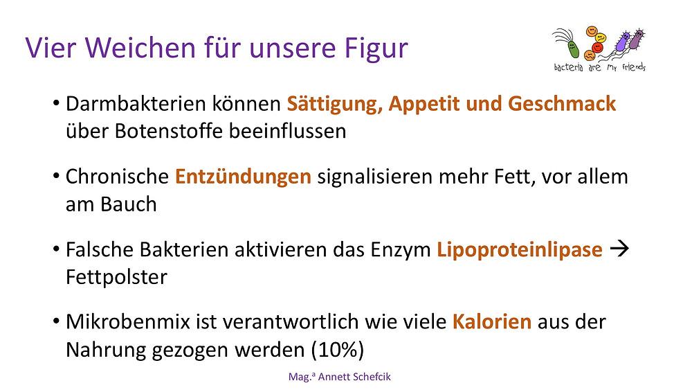 Annett Schefcik - ADIPOSITAS : DARMBAKTERIEN | Ernährungstraining Laufinstinkt.de - Bild 10