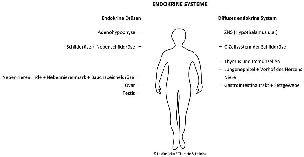 Laufinstinkt.de - Ernährungstraining - Pro Homöostase Vitalkur - Bild 3