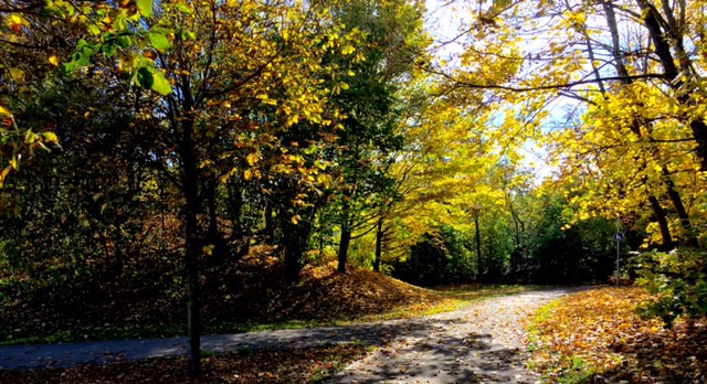 Laufinstinkt+ Oktober-Impressionen '15 D