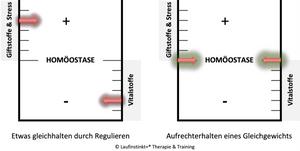 Laufinstinkt.de - Ernährungstraining - Pro Homöostase Vitalkur - Bild 2