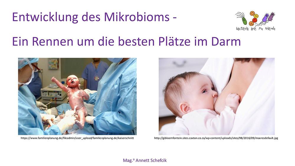 Annett Schefcik - ADIPOSITAS : DARMBAKTERIEN | Ernährungstraining Laufinstinkt.de - Bild 8