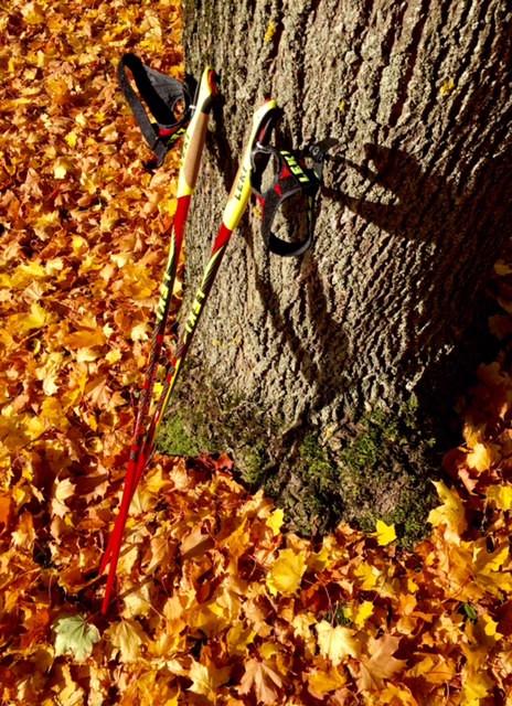 Laufinstinkt+ Oktober-Impressionen '15 M
