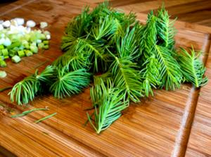 Laufinstinkt.de Frische Nadelbaumtriebe kulinarisch - Bild 2