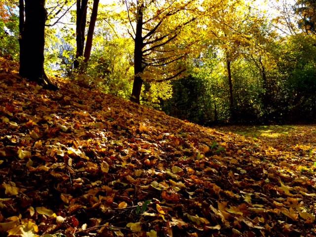 Laufinstinkt+ Oktober-Impressionen '15 G