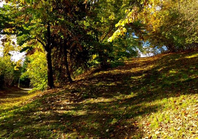 Laufinstinkt+ Oktober-Impressionen '15 C