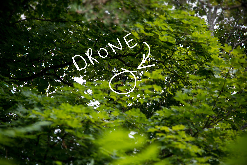 drone crashed in a tree