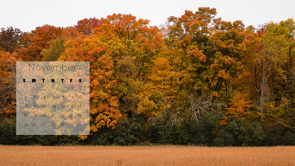 colourful fall trees desktop wallpaper November 2018 calendar free download
