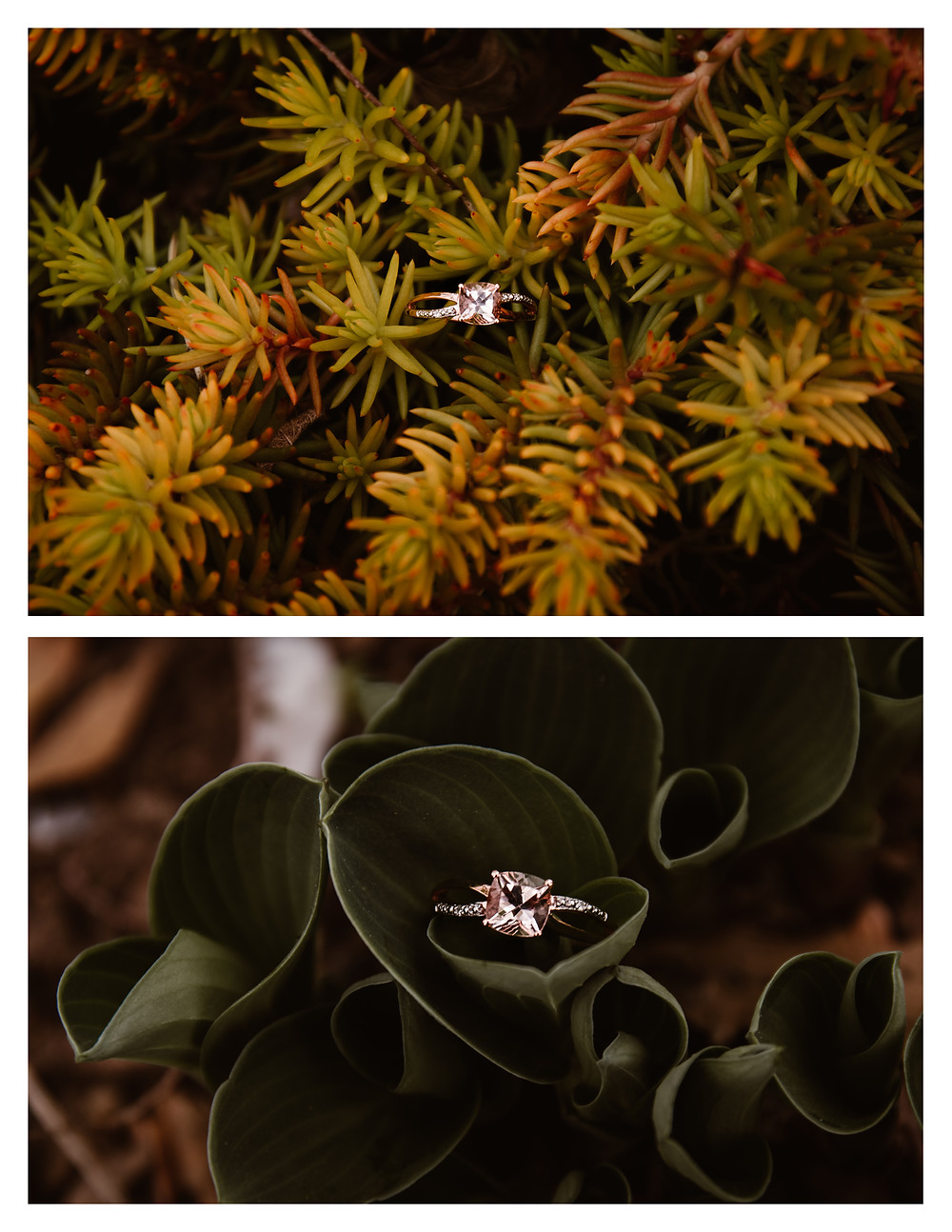 rose gold solitaire engagement ring in succulents ontario