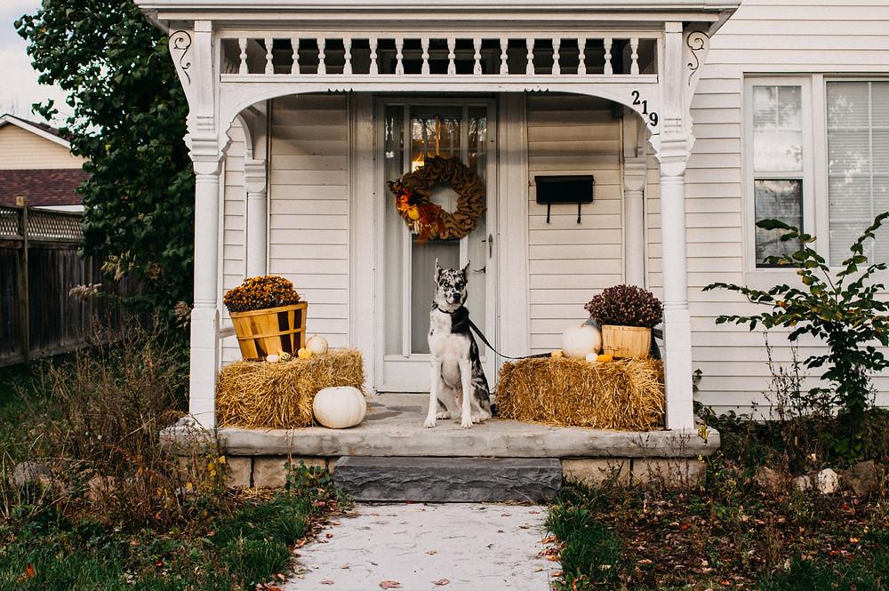 cute dog halloween decorations porch