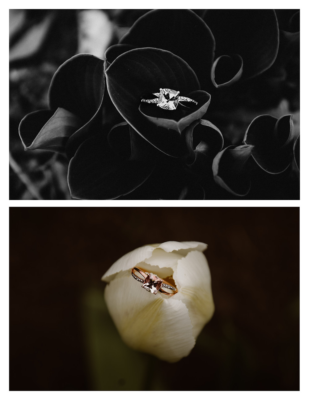 engagement ring in a white tulip