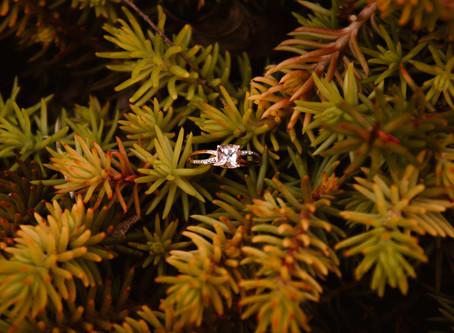 Sweet Surprise Proposal | Dundas, Ontario