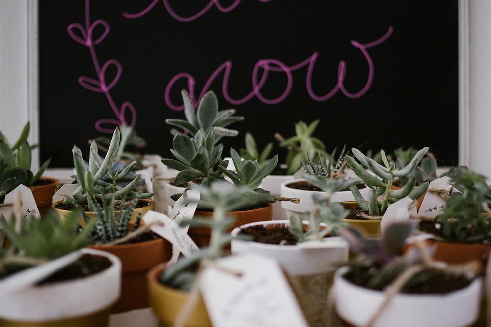 wedding shower, succulents, diy, pinterest, succulent crafts, succulent diy, let love grow, #SandGtietheknot
