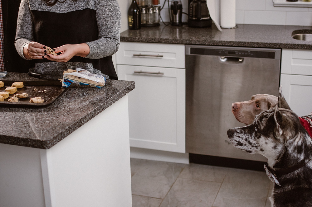 dogs helping in the kitchen