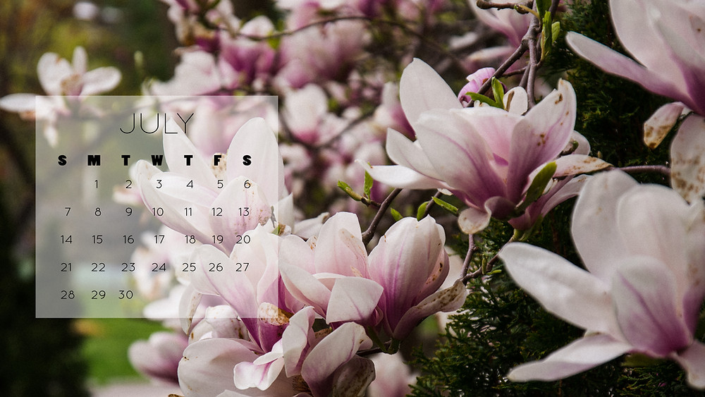Magnolia tree desktop wallpaper free download July 2019