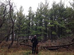 pet-photography-woods