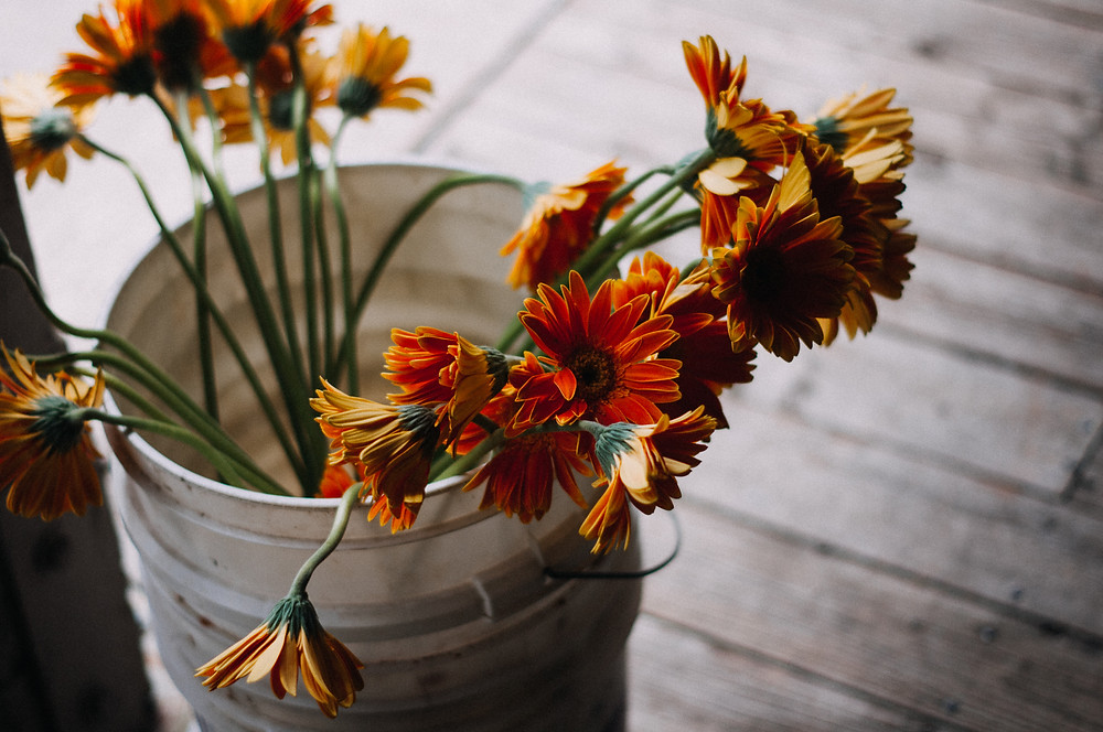 orange gerber daisy wedding flowers