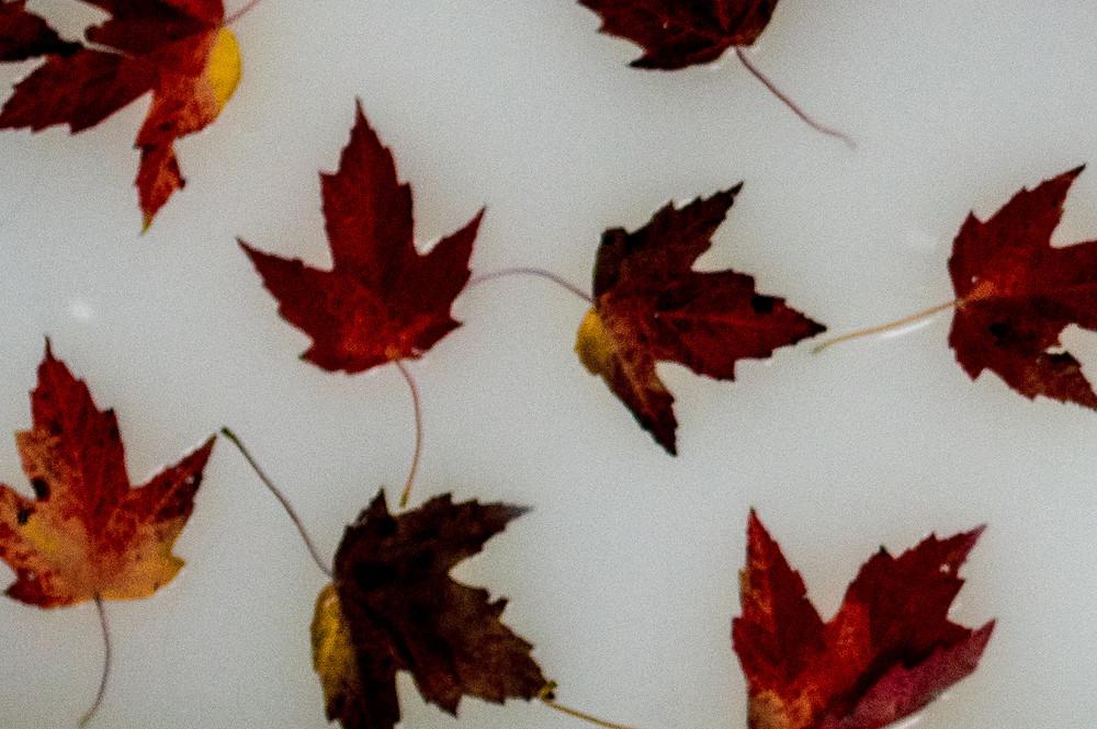 fall leaves in milkk bath