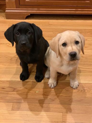 Duke & Tucker Prestigiacomo