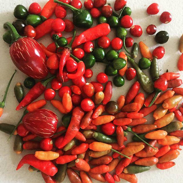 Cosechando diversidad # harvest #yucatan