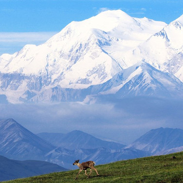 Alaska Denali with caribou Free to use.j