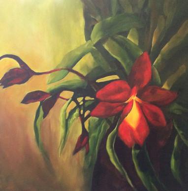 Lea Ann's Orchid