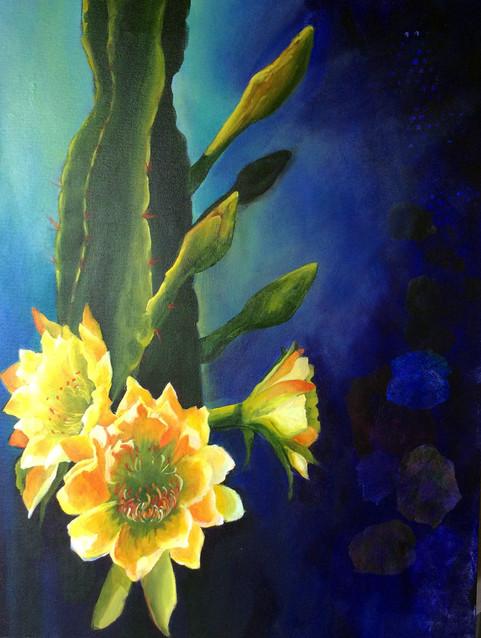 Sunrise Cereus