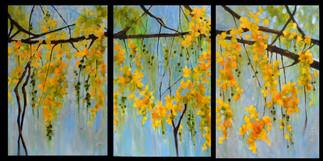 Cassia Triptych