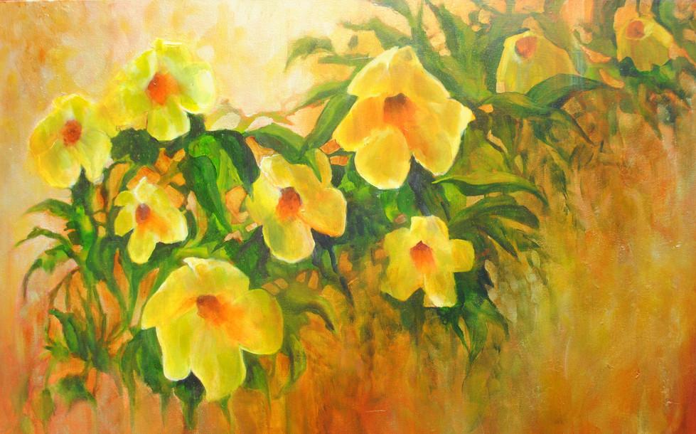 Yellow-Alamanda