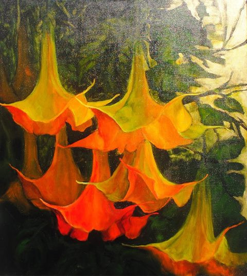 Sunset Brugmansia