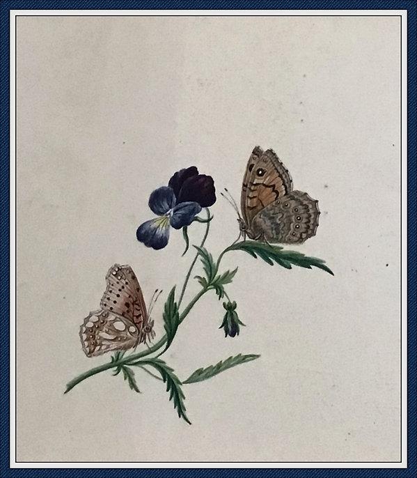 papillon 1_Fotor_Fotor.jpg