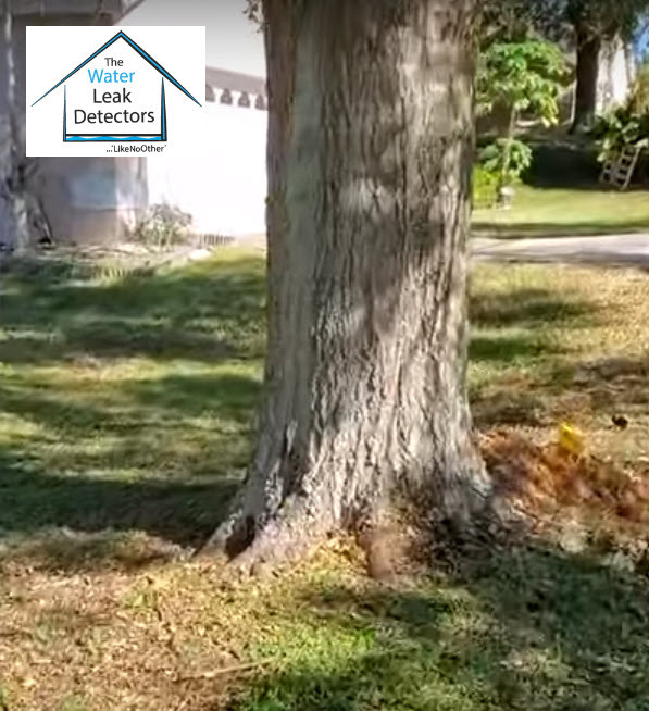 Main water leak discovered under a tree