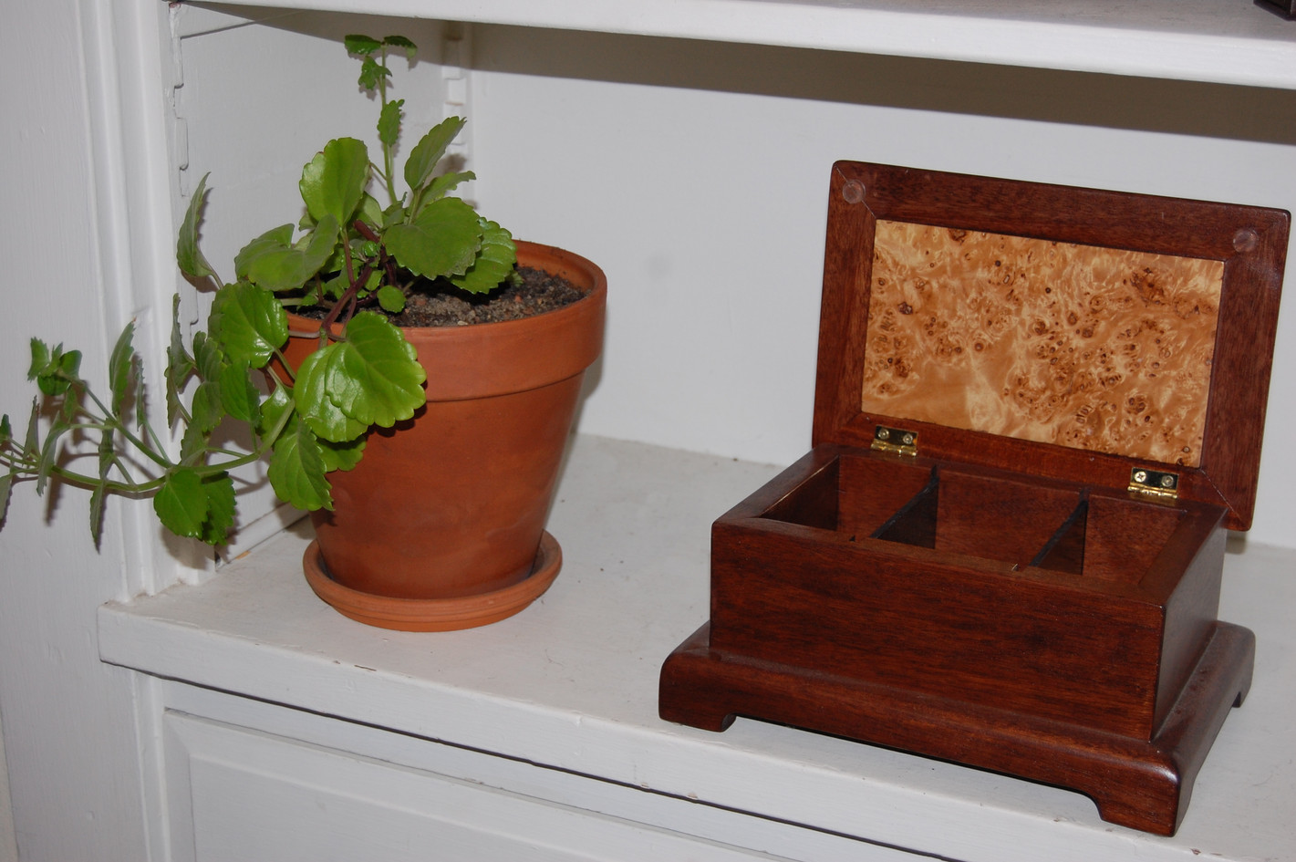 Mahogany and Elm Jewelery Box