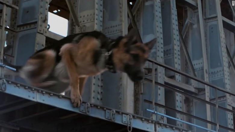 Screen cap of Hercules from A Dog's Purpose