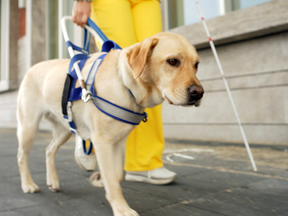 Comerciante é condenado por impedir entrada de cães-guias e seus donos em restaurante.