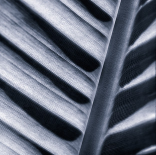 Organic Lines Series
