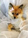 dress up your pet day pic23jpg (3)