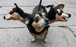 dog costume4.jpg