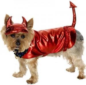 dog costume13.jpg