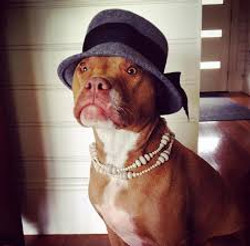 dress up your pet day pic20