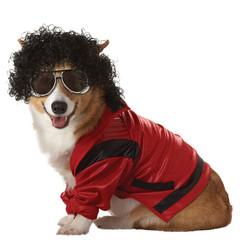 pop-king-dog-costume-1