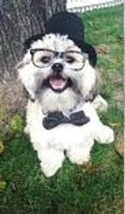 dress up your pet day pic23jpg (4)