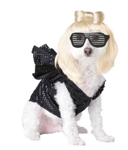 dog costume23.jpg