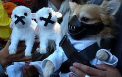 dog costume22.jpg