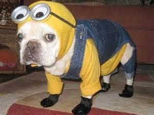 dog costume21.jpg