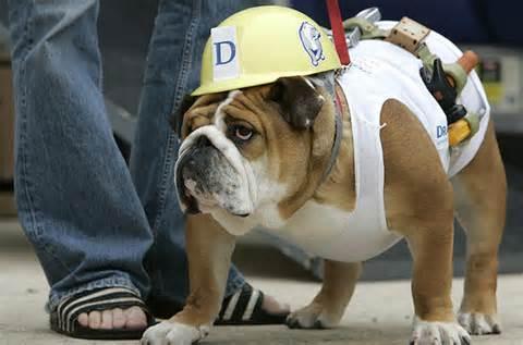 dog costume7.jpg