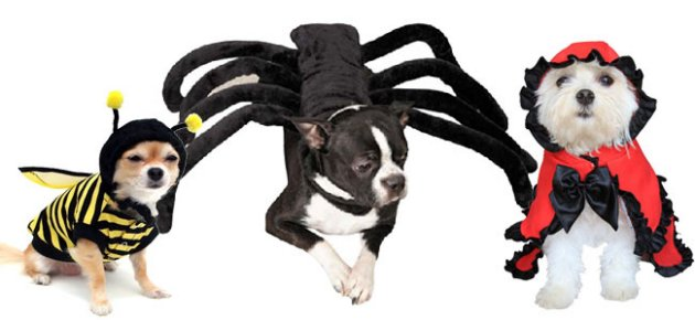 3ddfcd50-5bab-11e4-8c2a-4f6b6f1167c9_halloween-dog-costumes